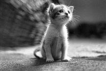 kitty cats / by Elizabeth Olsen