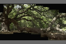 Trees great photographers / Il controllo del movimento, fotografare gli alberi : l'esempio americano di Antimo Palumbo.   http://www.ilpulsanteleggero.it/pagine/rupestrepalumbo.htm