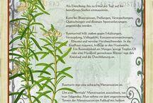 Historic herbarium