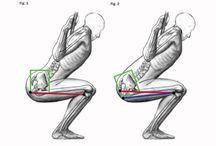 Anatomie mouvement