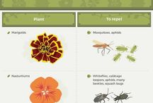 Garden Pests / Pests in garden can ruin a crop if you're not careful about preventing, treating, and eradicating them.