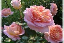 FLOWERS & GARDENS / by Brenda W