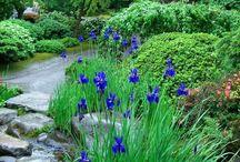 purifier garden_grey water