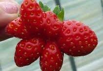 Odd Fruit & Veggie Shapes