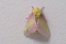 Moths / by Noc NocturnalLady