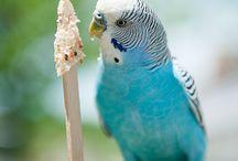 Beautiful Birds / 'Un seul oiseau en cage et la liberté est en deuil.' Jacques Prévert  / by Maxi Tendance