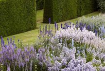 Purple and White Garden