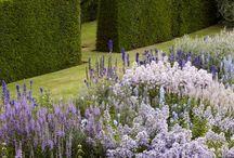 Hedges shape