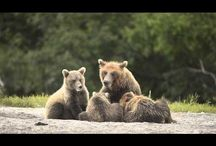 International Wildlife Photo Travel