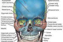 anatomy / by Cortney Howard