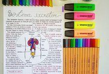 estudo!