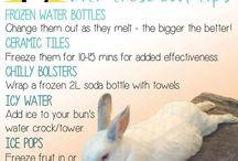 bunnies' care