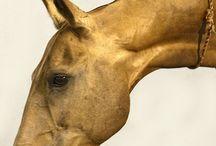 Akhal-Teke  Horses / Il Cavallo Dorato di Alessandro Magno