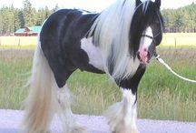 Hest!