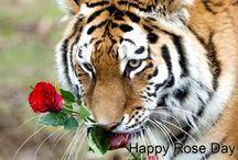 Valentine's Day Celebration / Celebrate valentine's day with your love one at solluna resort.
