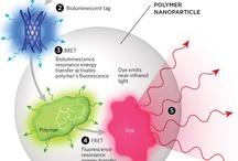in vivo imaging