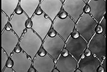 Rain Drops on Roses / by Lorrie Elliott