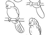 Birds - Parrots Not Australian