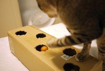 DIY Pets / by Grizabella Bengal Cat
