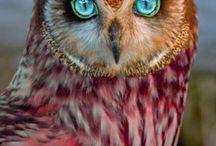 szépséges madarak