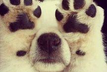 Animals ^^