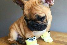 Cutie Pies-Doggy