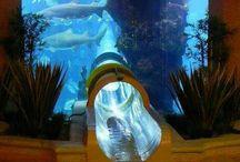 The Palm Atlantis Dubai