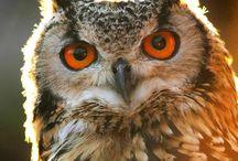 Jens owls