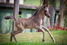 Horses n ponies / by Joann D'Agostino