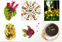 Flora Florager, une fine fleur toute en couleurs!
