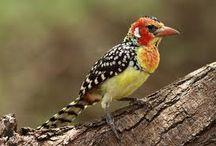 Kenya Birding Safaris / The great Kenya birding safari!in the wild