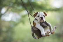 Too Cute:) / by Elaine Finch