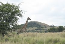 Wild Encounters in the Dome / Savannah Plains, bush and the unique biodiversity of the Vredefort Dome create natural habitats for small and big game and an abundance of natural vegetation.