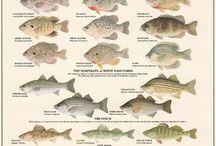Freshwater Fishing / Freshwater Fishing