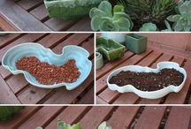 Succulents / by Michelle