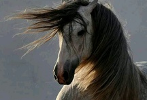<3<3 Beautiful Horses!! <3<3