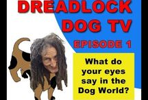 Dreadlock Dog Man