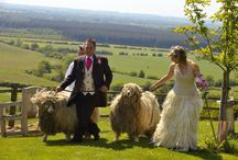 Lincolnshire Longwool Gown / In 2009 I was asked by Louise Fairburn, a Lincolnshire sheep breeder, to work with her to create a wedding gown made solely from wool from her flock.