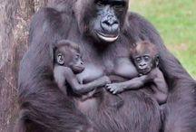 animals twins