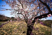 spring wedding in Spain by Ulla / Wedding in Spain, spring time.