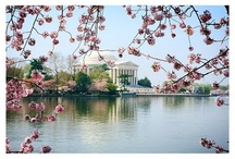 Washington DC / by Cartoloji