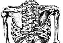 bones, sceletons