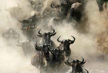 Tiere | Best of