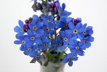 Flowers / by Melissa Williamson