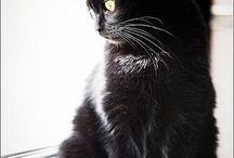 Miauuu <3 / Cats