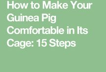 Make Your Guinea Pig Comfortable