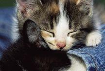 My world my animals..!!:-**