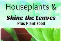 skoonmaak en voeding vn plante