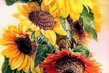 Ayçiçekleri/ Sunflowers