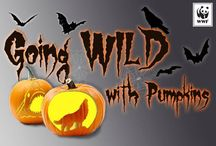 Pumpkin Carving Stencils / Show off your passion for animals on your pumpkin--download our pumpkin carving stencils! http://worldwildlife.org/pumpkin